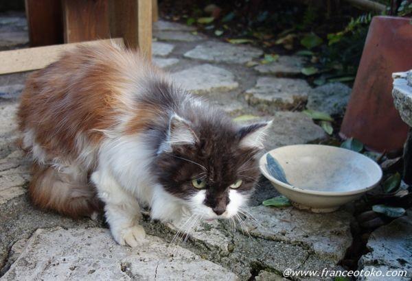 猫 ロングヘア