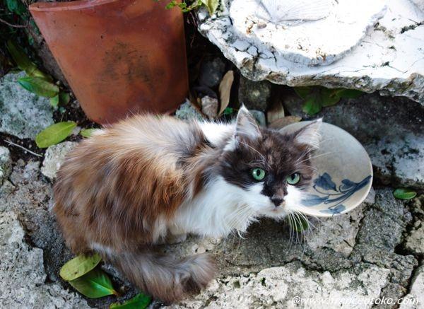 神秘的 猫