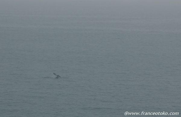 クジラ ロサンゼルス