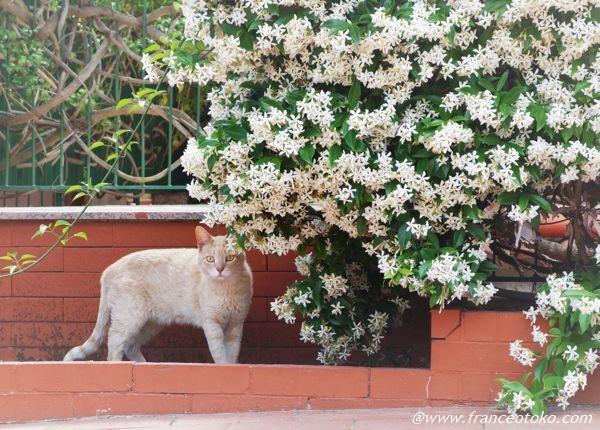 とてもかわいい猫の写真