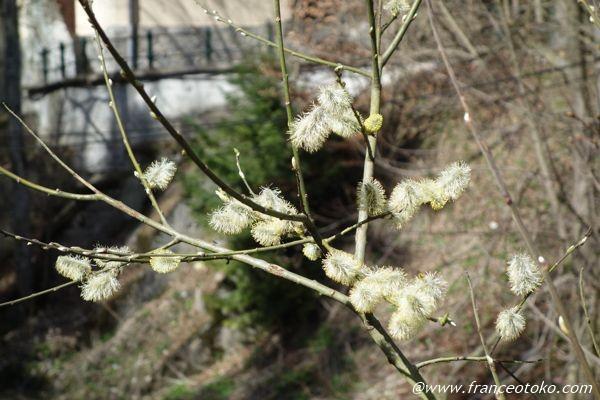 ルーマニア 植物