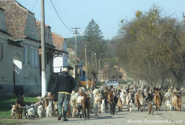 羊飼い ルーマニア