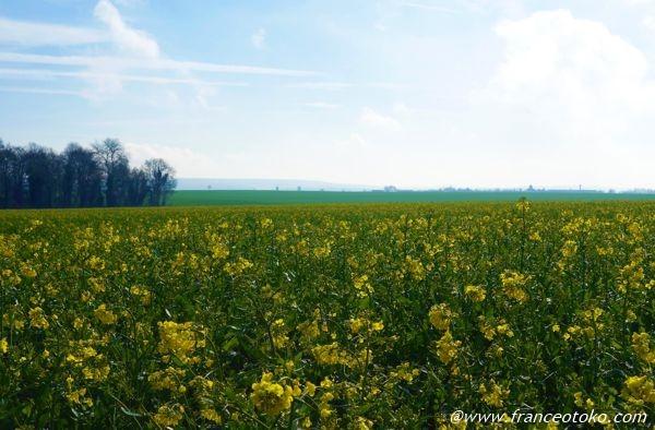 フランス 春の風景