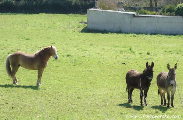 フランス 馬