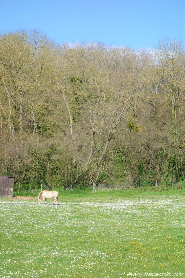 フランス 白馬