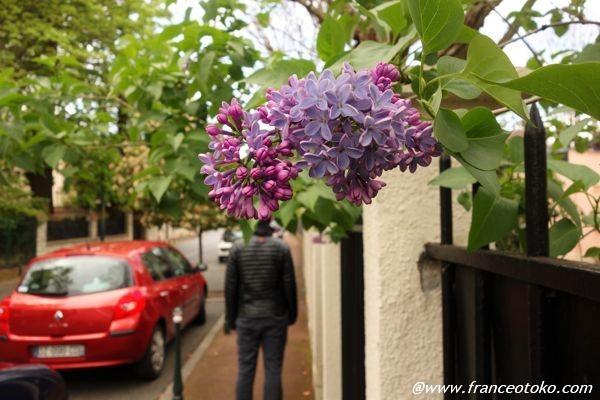 フランス 散歩