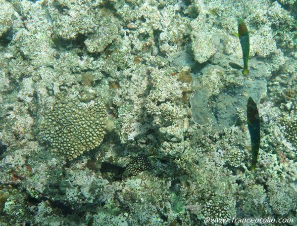 珊瑚 沖縄