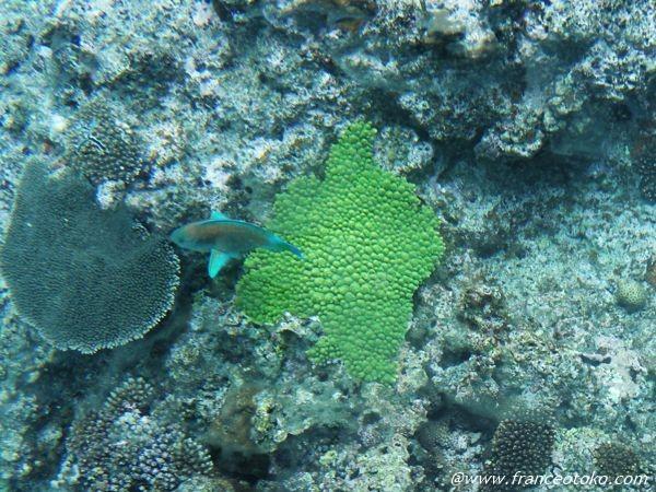 沖縄 珊瑚