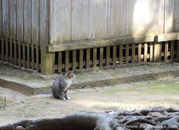識名園 猫