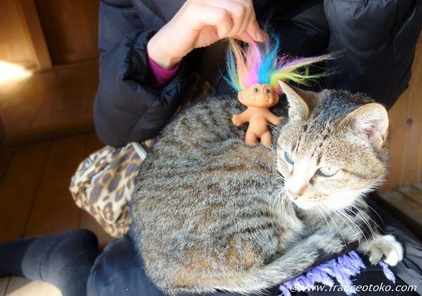 トロール 猫 コラボ