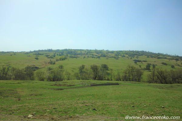 ルーマニア 牧草地