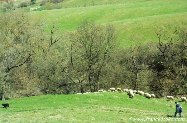 ルーマニア 自然風景