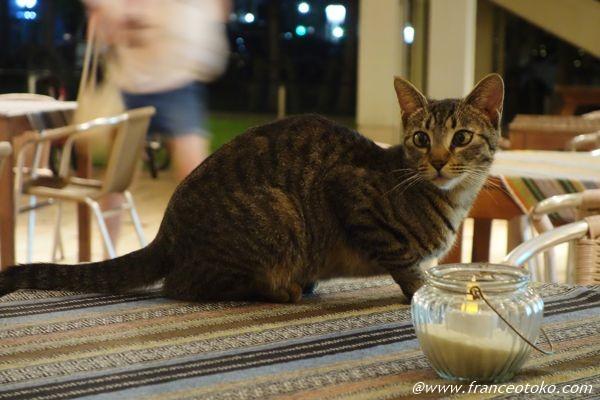 猫 夜遊び