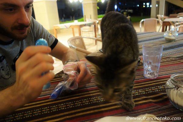 石垣島 猫