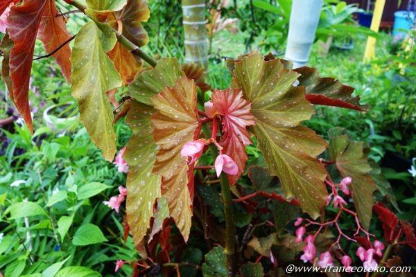 沖縄 植物 亜熱帯