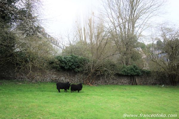 ブルターニュ 黒羊