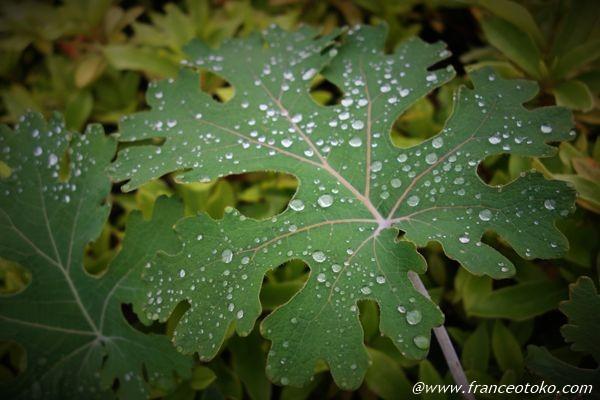 5月が梅雨