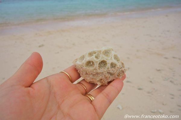 波照間島 珊瑚