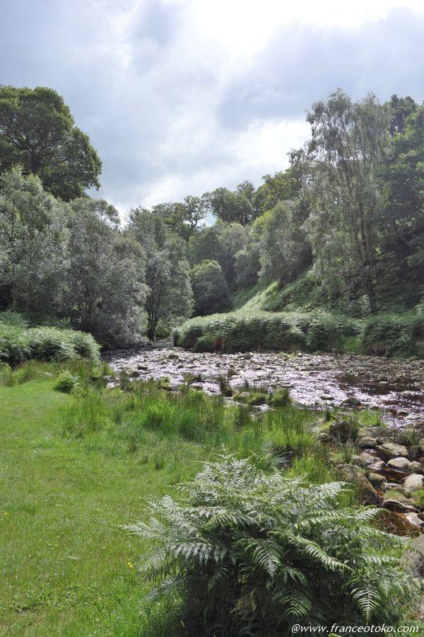 アイルランド 森と自然