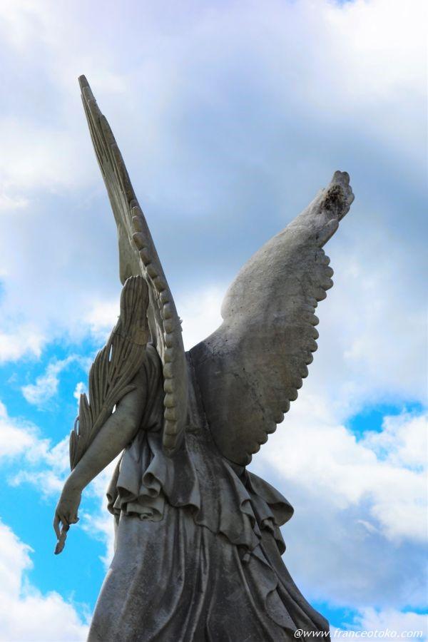 天使 後ろ姿