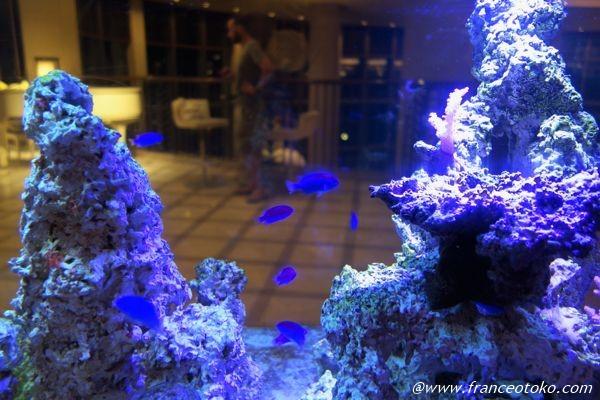 熱帯魚 青