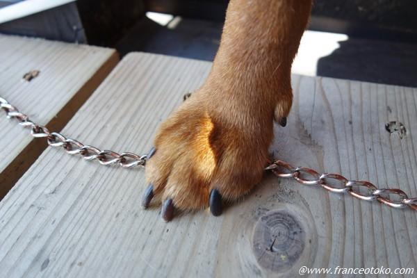 犬の手 かわいい