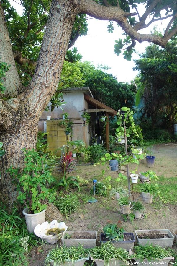 石垣島 自然