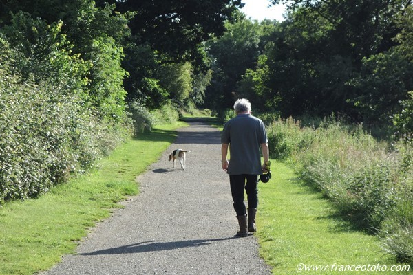 アイルランド 犬の散歩
