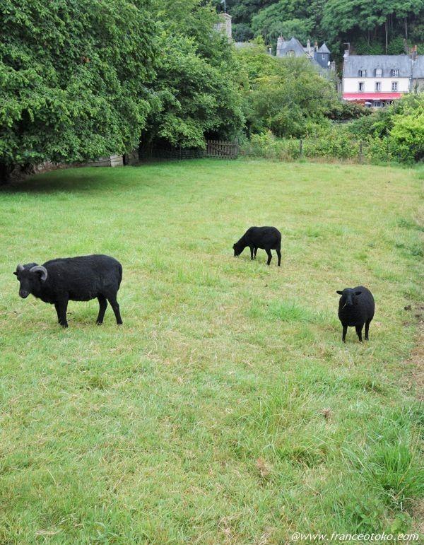 ブルターニュの黒羊