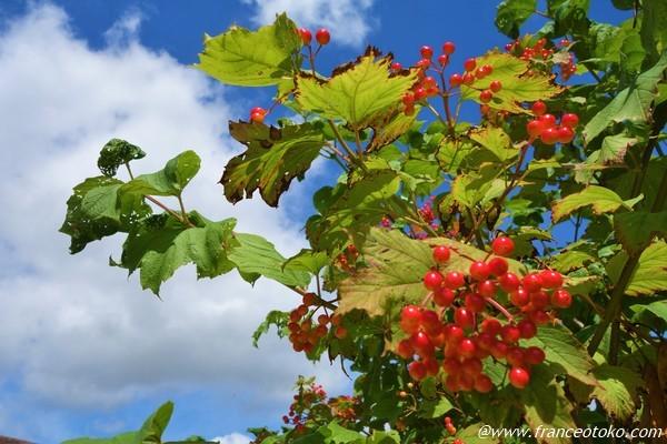 フランス 木の実