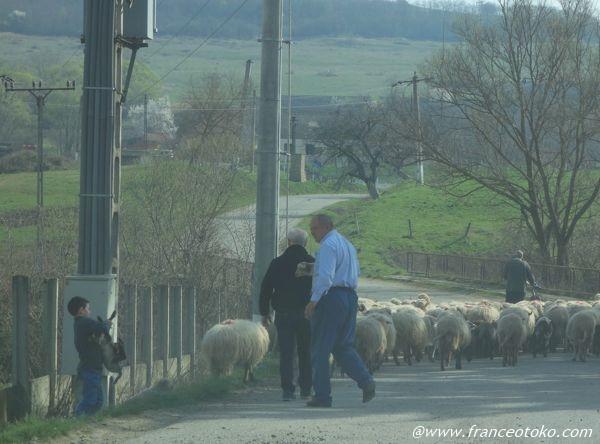 ルーマニア 羊飼い