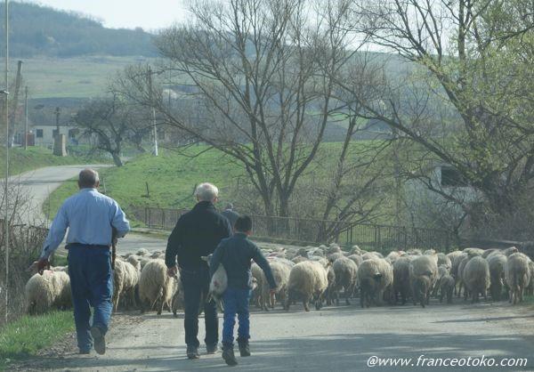 ルーマニア 牧歌的風景
