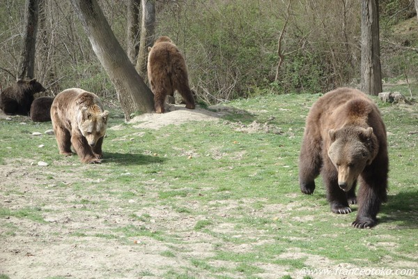 Libearty Bear Sanctuary  romania
