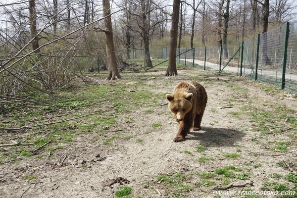 ルーマニア 動物観光