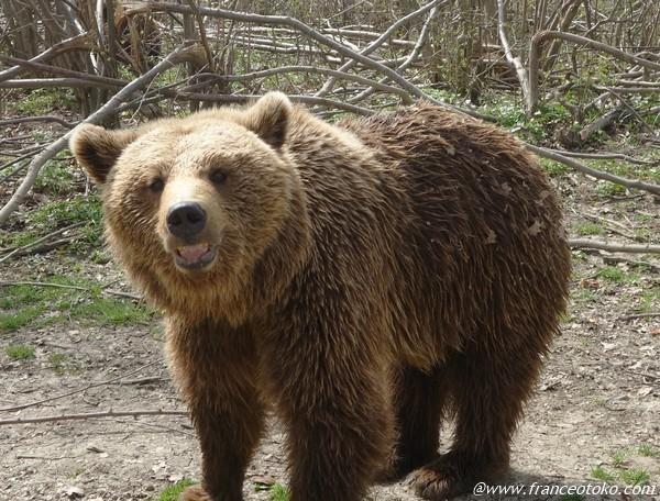 ルーマニア 動物とふれあい