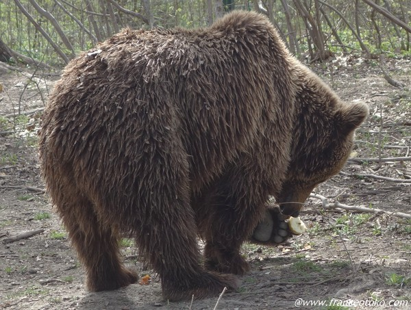 ルーマニア 熊 かわいい