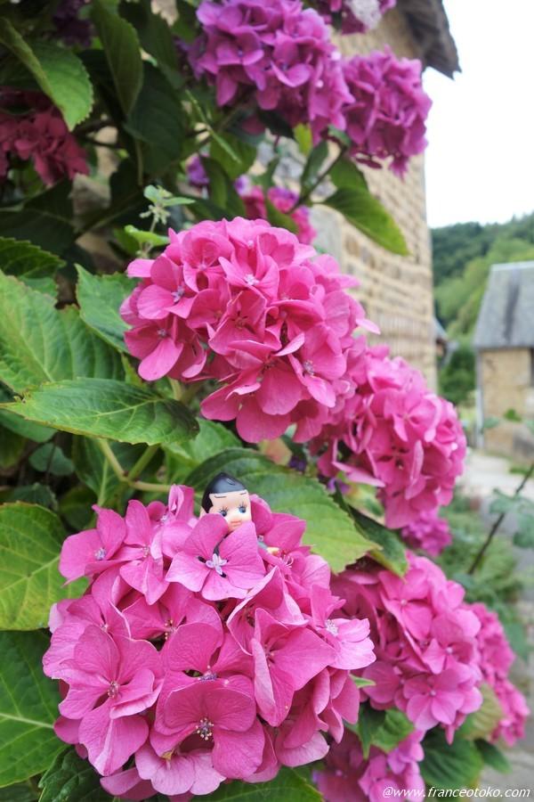 フランス 紫陽花
