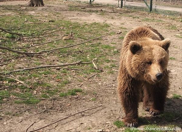 ルーマニア 熊 大好き