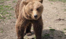 やっぱり熊が好き!ルーマニアの熊保護センターLibearty Bear Sanctuary