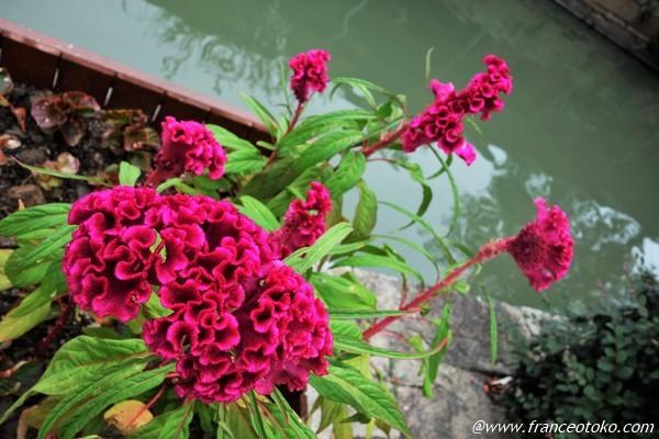 モワモワした花