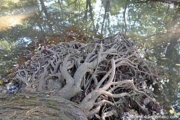 芸術的な木の根
