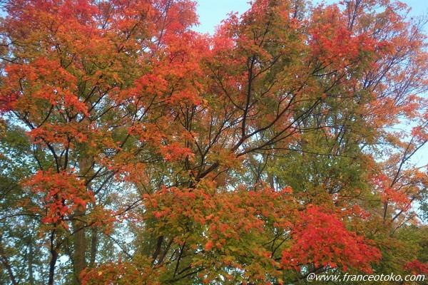 紅葉 日本