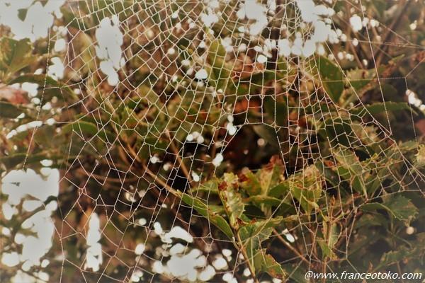 きれいな蜘蛛の巣