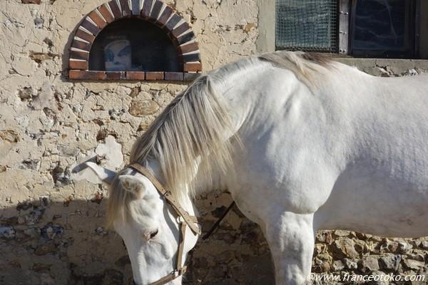 ペルシュロン フランス 馬