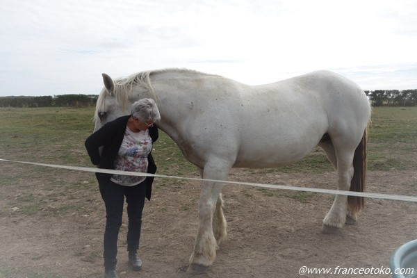 ペルシュロン フランス 馬 ノルマンディー