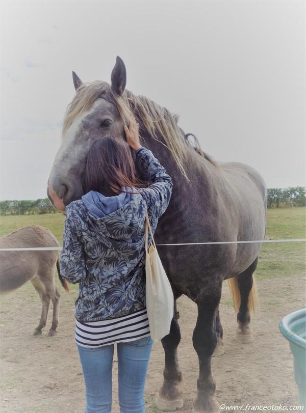 馬 大好き フランス