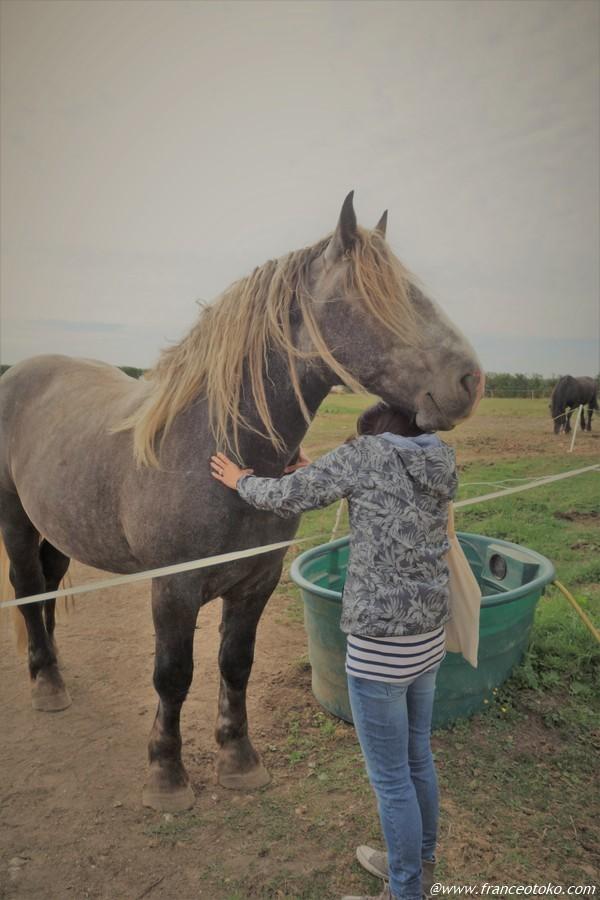 馬をマッサージ フランス