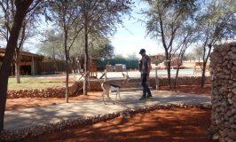 Bagatelle Kalahari Game Ranch カラハリ砂漠の苦労話