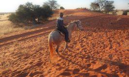 カラハリ砂漠でゆらゆら乗馬サファリしながら人生
